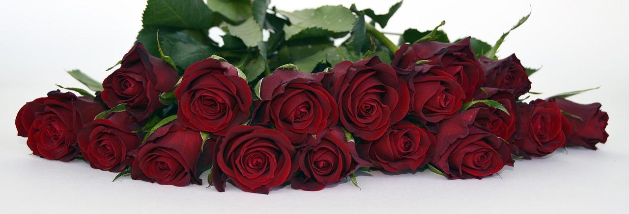 roses-1473682_1280